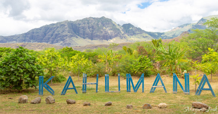 オーガニック・ファーム併設のカフェ KAHUMANA ORGANIC FARM | HAWAII